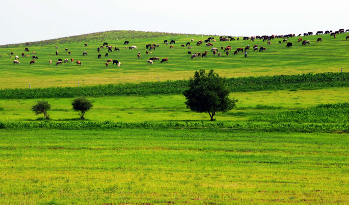The Best Time to Visit Inner Mongolia