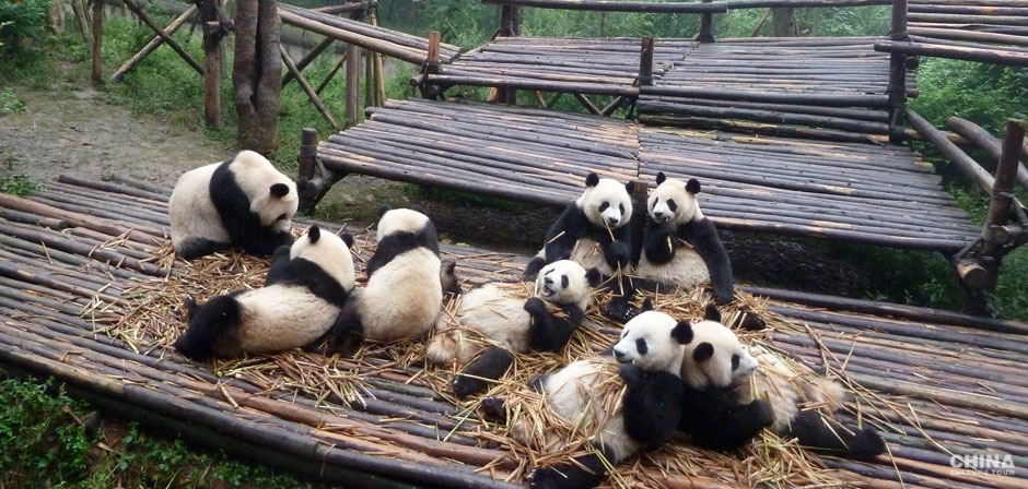 Luxury Sichuan Tours