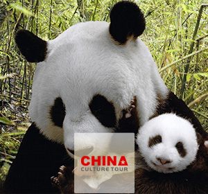 China Highlights with Panda Contact
